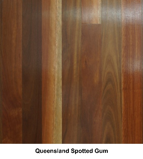 Queensland Spotted Gum