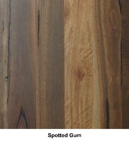 Spotted Gum Feature Grade